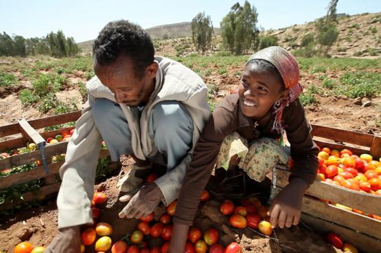 Oxfam wil eerlijke en duurzame voedselsystemen, waarin de belangen van producenten en werkers voorop staan. (Foto World Bank Photo Collection, Flickr)
