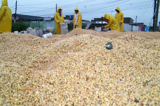 Soja is de belangrijkste grondstof voor de mondiale veevoederindustrie geworden. Voor de aanleg van immense percelen landbouwgrond voor monoculturen van soja wordt de natuurlijke rijkdom verwoest. (Foto Márcio Garoni, Flickr)
